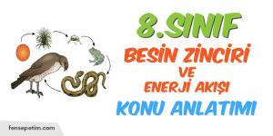 8.Sınıf 6.Ünite 1.Bölüm Besin Zinciri ve Enerji Akışı Konu Anlatımı