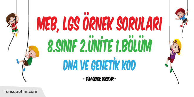 8.Sınıf LGS Örnek Soruları – DNA ve Genetik Kod